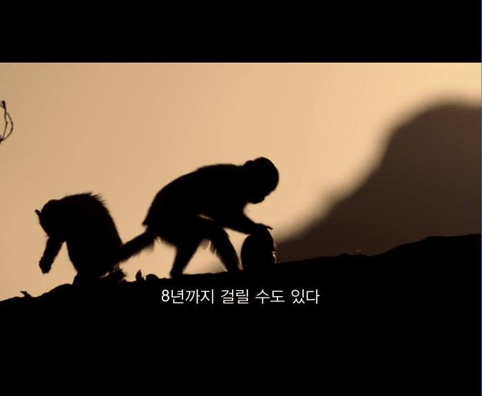 원숭이.png